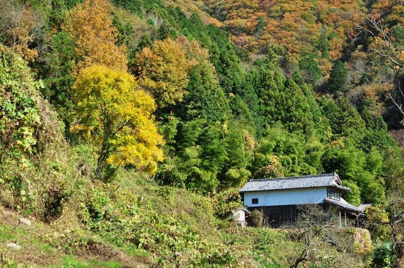 写真:暮畑の秋の風景