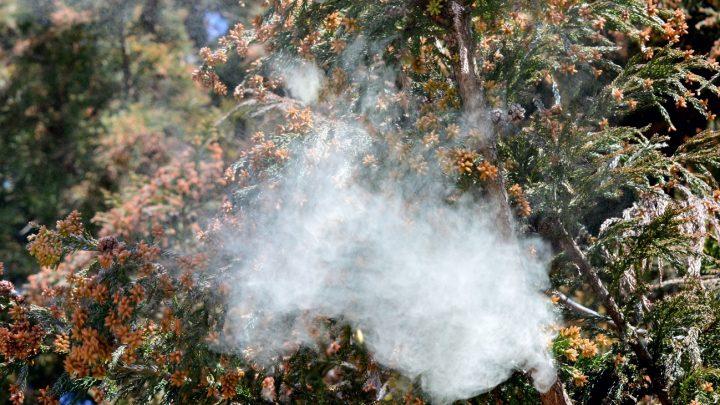 花粉症は春のイメージでしたが実は冬から通年のケアが重要です。