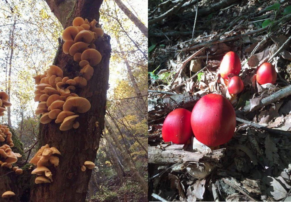 伊那谷のキノコ。自然から湧き出でるパワーに癒されると同時に秋の旬の糧が得られます。
