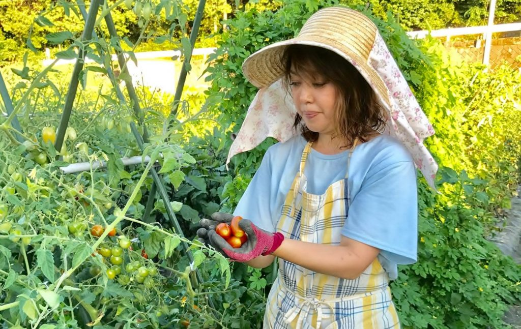 『DETOX FARМ』でトマトを収穫する滝田さん。
